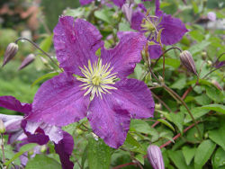 kwiat-w-ogrodzie